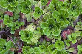 Florida Backyard Landscaping Ideas by Garden Design Garden Design With Florida Ground Cover Plants Ice