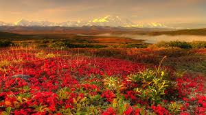 Beautiful Garden Images Alaska Beautiful Garden Red Rose Frida Kahlo Pinterest
