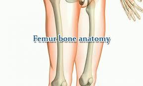 Human Anatomy Anterior Humerus Bone Anatomy Anterior View Bone Disease
