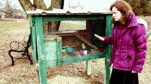 a rabbit and how it can be useful for your backyard farm prepper