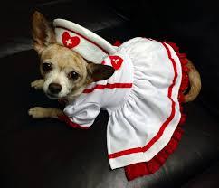 Halloween Costumes Dogs 51 Dog Halloween Costumes Images Animals Pet