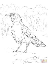 realistic american crow coloring page free printable coloring pages