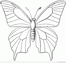 20 butterfly outline coloring pages timykids