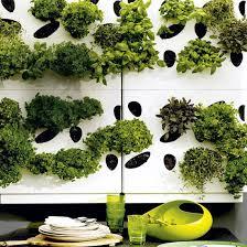 wall herb garden 294 u2014 demotivators kitchen wall herb garden