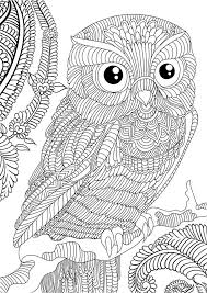 coloring page for adults owl 60 best owl coloring pages images on pinterest coloring books