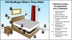 How To Get Rid Of Bed Bugs In Mattress How To Get Rid Of Bed Bugs The Ultimate Guide Cuddly Home Advisors