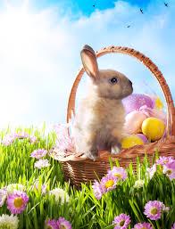 bunny easter easter bunny history sandman says