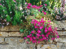 Garden Wall by Plant A Rockery Wall Hgtv
