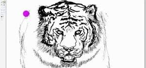 how to draw a tiger in microsoft paint software tips wonderhowto