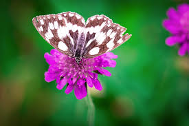 butterfly flower white brown butterfly perched on pink flower free stock photo