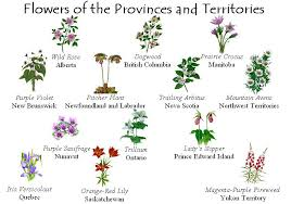 canada flowers canadainfo images downloads fact sheets to
