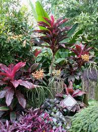 175 best tropical gardening and landscaping ideas images on