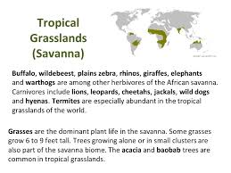 Tropical Savanna Dominant Plants - birds like hawks cardinals snowy owls and woodpeckers are found
