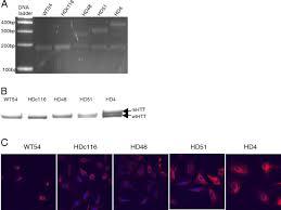 keap1 modifying small molecule reveals muted nrf2 signaling