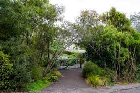plants native to new zealand fernglen native plant gardens is a great collection of new zealand
