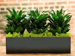Plants That Dont Need Light 6 Idiot Proof Houseplants That Can Live For Weeks Without Water