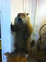 Groundhog Meme - groundhog is really hating you right now