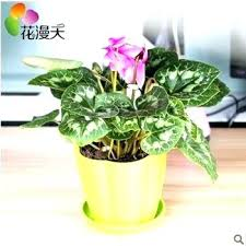 Small Desk Plants Common Office Plants View Photo In Gallery Common Office Desk