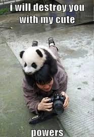 Cute Meme - 80 cute panda memes