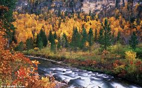 South Dakota forest images Spearfish canyon black hills national forest south dakota jpg