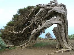 25 most astonishing and unique trees of the world