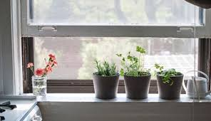 indoors garden this is what you need for successful indoor gardening hobby farms