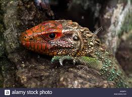 reptile terrarium stock photos u0026 reptile terrarium stock images