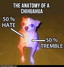 Chihuahua Meme - anatomy of a chihuahua meme guy