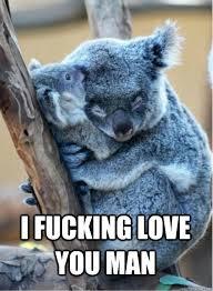 I Fucking Love You Memes - i fucking love you man overly attached koala quickmeme