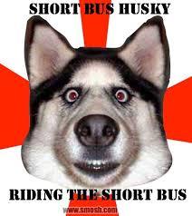 Short Bus Meme - name the meme win a shirt winner smosh