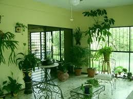 live indoor plants indoor plants that clean the air