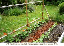 How To Build A Trellis Eartheasy Bloghow To Build A Bean Trellis For Raised Garden Beds