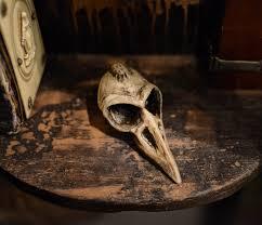 creepy home decor gothic bird skull ornament https www etsy com listing 123567558