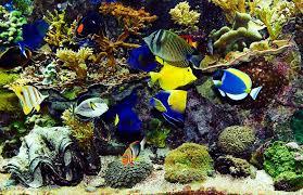 beautiful real colourful marine fish aquarium relaxing natural