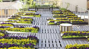 roof garden plants incredible garden design roof rooftop ideas top image of plants