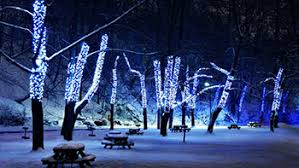 christmas lights wichita ks party express bus packages occasions and specials in wichita