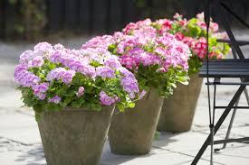 balkon grã npflanzen pflegeleichte balkonpflanzen den balkon leicht und schnell verschönern