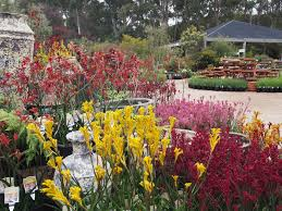 Australian Garden Flowers by Parks And Gardens Nature And Wildlife Yarra Valley And Dandenong