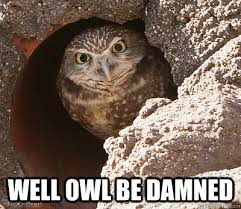 Funny Owl Meme - well owl be damned angry owl quickmeme