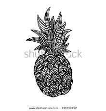 the pineapple sketch vector illustration stock vector 335052422
