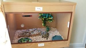 how to build a tortoise table 3 years old female horsefield tortoise and all set swansea