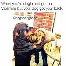 Single On Valentines Day Meme - 21 dog pictures that perfectly sum up your valentine s day barkpost