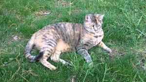 tawny cat loves backyard u0026 wild bird calls spring evening northern
