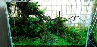 nfl forum anyone into aquariums planted aquarium