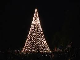 tree of light at the johannesburg zoo with wits hospice the