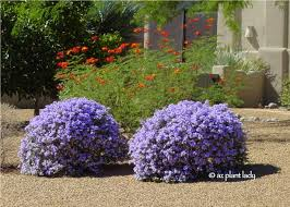 native plants of arizona what plant where beautiful plant combinations ramblings from a