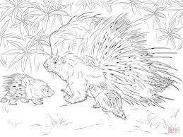 porcupine coloring pages getcoloringpages com