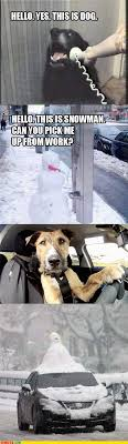 Dog Driving Meme - i can has cheezburger hello yes this is dog funny animals