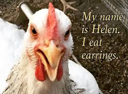 Good Backyard Pets When Good Chickens Go Bad Shame Them Mnn Mother Nature Network