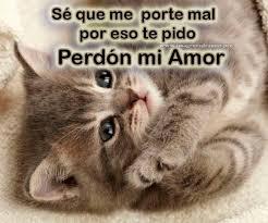 imagenes con frases de amor super tiernas gatitos lindos con frases bonitas de amor para descargar gratis